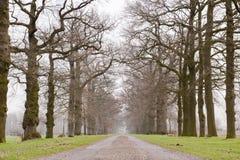 Callejón de árboles históricos viejos en invierno fotografía de archivo libre de regalías