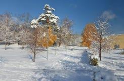 Callejón de árboles, Novokuznetsk Siberia, Rusia del invierno Foto de archivo libre de regalías