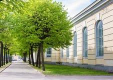 Callejón de árboles verdes en la calle de St Petersburg foto de archivo