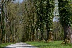 Callejón de árboles viejos, Baviera Fotografía de archivo libre de regalías