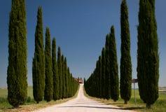 Callejón de Cypress imágenes de archivo libres de regalías