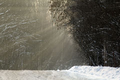 Callejón de Forest Park del otoño de Yin Yang Imagen de archivo libre de regalías