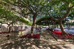 Callejón de la calzada de árboles imperecederos en Santa Cruz de Tenerife Canar Fotos de archivo libres de regalías