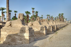 Callejón de la esfinge en Luxor Imagenes de archivo