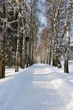 Callejón de la nieve Fotos de archivo libres de regalías