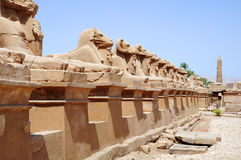 Callejón de las ovejas del templo de Karnak Imagenes de archivo