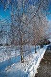 Callejón de los árboles de abedul con helada Foto de archivo