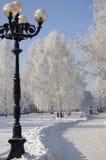 Callejón de los árboles de abedul del invierno Fotos de archivo libres de regalías