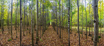 Callejón de los árboles en bosque del otoño Imagenes de archivo