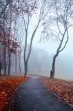 Callejón de niebla del otoño - paisaje hermoso del otoño Fotos de archivo libres de regalías