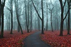 Callejón de niebla del otoño - paisaje misterioso del otoño Imagen de archivo libre de regalías