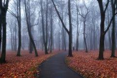 Callejón de niebla del parque del otoño - paisaje misterioso del otoño Imagen de archivo