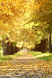 Callejón de oro del tilo del otoño en ciudad con las hojas caidas Fotografía de archivo