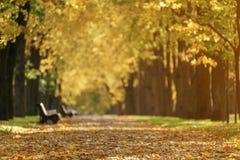 Callejón de oro del tilo del otoño en ciudad con las hojas y los bancos caidos Fotos de archivo