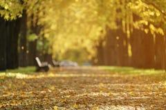 Callejón de oro del tilo del otoño en ciudad con las hojas y los bancos caidos Imagenes de archivo