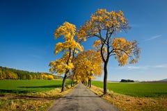 Callejón de oro hermoso del otoño Fotografía de archivo libre de regalías