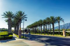 Callejón de palmas en las calles de Ontario, California imagen de archivo