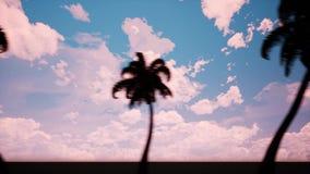 Callejón de palmeras almacen de video