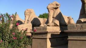 Callejón de Ram Headed Sphinxes, templo de Karnak, Luxor, Egipto metrajes