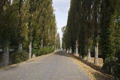 Callejón del árbol de álamo en parque Fotos de archivo