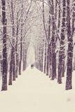 Callejón del árbol del invierno Foto de archivo libre de regalías