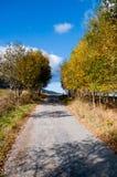 Callejón del árbol del otoño Fotografía de archivo