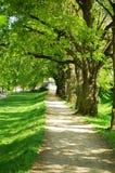 Callejón del árbol del verano Imágenes de archivo libres de regalías
