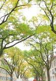 Callejón del árbol en calle Fotos de archivo