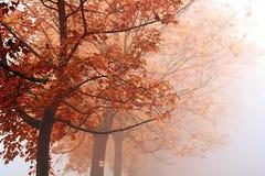 callejón del árbol en la niebla Fotos de archivo