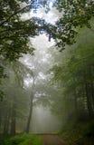 Callejón del árbol forestal engullido en niebla profunda imagen de archivo