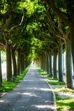 Callejón del árbol plano fotografía de archivo