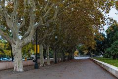 Callejón del árbol plano en la calle de Palau Nacional del de Mirador, Barcelona imágenes de archivo libres de regalías