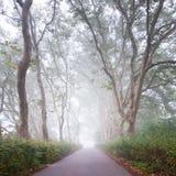 Callejón del árbol plano en niebla fotos de archivo