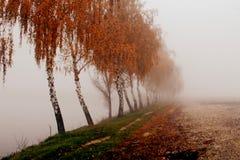 Callejón del abedul en el autumntime Imagen de archivo
