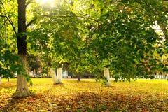Callejón del abedul en el otoño Rusia Fotos de archivo
