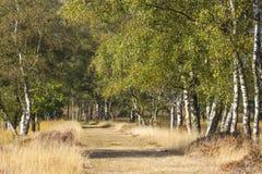 Callejón del abedul en el parque nacional Hoge Veluwe Imagenes de archivo