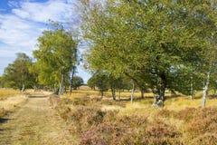 Callejón del abedul en el parque nacional Hoge Veluwe en los Países Bajos Fotos de archivo