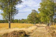 Callejón del abedul en el parque nacional Hoge Veluwe en los Países Bajos Foto de archivo libre de regalías