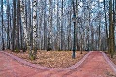 Callejón del abedul en parque del otoño con las trayectorias Fotografía de archivo