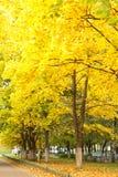 Callejón del arce del otoño imagenes de archivo