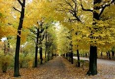 Callejón del arce del otoño Foto de archivo libre de regalías