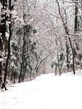 Callejón del bosque de la nieve Foto de archivo libre de regalías