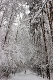 Callejón del bosque del invierno Foto de archivo libre de regalías