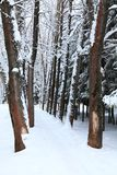 Callejón del invierno Fotografía de archivo