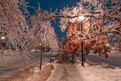 Callejón del invierno con los árboles congelados y luz de calle en Toronto Imagenes de archivo