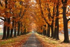 Callejón del otoño imagen de archivo libre de regalías