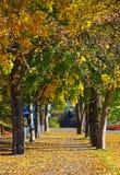 Callejón del otoño Fotografía de archivo