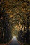 Callejón del otoño Fotos de archivo libres de regalías