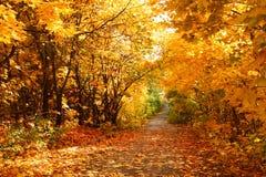 Callejón del otoño Foto de archivo libre de regalías