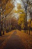 Callejón del otoño cubierto con las hojas caidas amarillas Foto de archivo